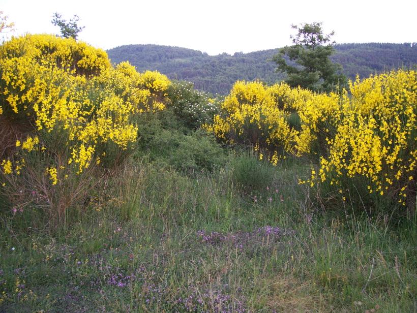 Natura for Colline o cabine marroni